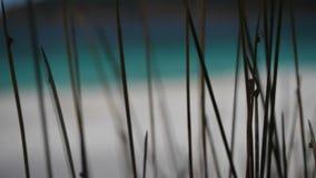 Wineglass παραλία κόλπων απόθεμα βίντεο