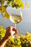 Wineglass στο χέρι ενάντια στους αμπελώνες Lavaux στην περιοχή, Switze Στοκ εικόνα με δικαίωμα ελεύθερης χρήσης