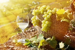 Wineglass and basket of grapes Stock Image