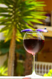 Wineglass with cold sangria Stock Image