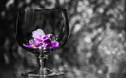 Wineglass and flower stock image