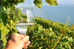 Wineglass in the hand Royalty Free Stock Photography