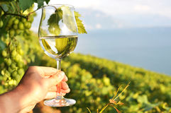 Wineglass in the hand Stock Image