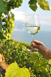 Wineglass in the hand Royalty Free Stock Photo