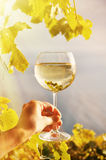 Wineglass in the hand Royalty Free Stock Image