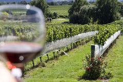 Wineglass in vineyard Stock Images