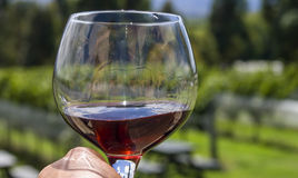Wineglass in vineyard stock image
