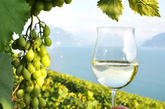 Wineglass Royalty Free Stock Photography