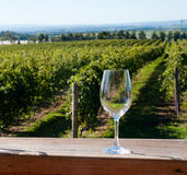 Wine glass and vineyard Stock Photos