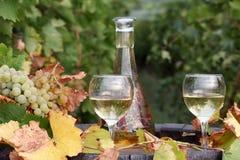 wineglasses Arkivbild
