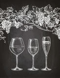 Wineglasses and grape vine on chalkboard. Set of wineglasses and grape vine. Red, white wine and champagne. Hand drawn sketch on chalkboard background Royalty Free Stock Image