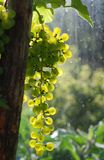 Winegrape against the light Stock Images