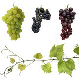 Winegrapes Fotografia de Stock Royalty Free