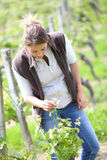 Winegrower checking on plants. Woman winegrower working in vineyard Royalty Free Stock Photos