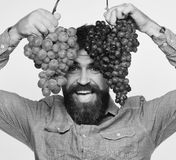 Winegrower with cheerful face holds clusters of grapes up. Viticulture and gardening concept. Man with beard holds. Bunches of black and green grapes on white Stock Photo