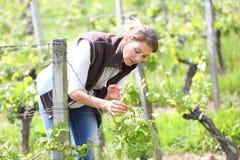 Winegrower die in wijngaarden werken stock foto's