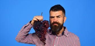 Winegrower met verleidelijk gezicht houdt cluster van druiven dichtbij gezicht royalty-vrije stock foto