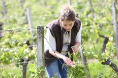 Winegrower som kontrollerar på växter i vingård royaltyfri bild