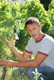 Winegrower in vine rows Stock Photo