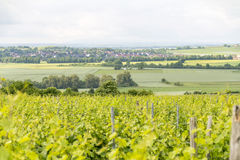 Winegrowing around Loerzweiler. Winegrowing scenery around Loerzweiler in the Rhineland-Palatinate in Germany at spring time Royalty Free Stock Photography