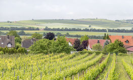 Winegrowing around Loerzweiler. Winegrowing scenery around Loerzweiler in the Rhineland-Palatinate in Germany at spring time Stock Photos