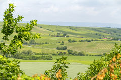 Winegrowing around Loerzweiler. Winegrowing scenery around Loerzweiler in the Rhineland-Palatinate in Germany at spring time Stock Images