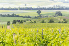 Winegrowing around Loerzweiler. Winegrowing scenery around Loerzweiler in the Rhineland-Palatinate in Germany at spring time Royalty Free Stock Photo