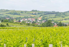 Winegrowing around Loerzweiler. Winegrowing scenery around Loerzweiler in the Rhineland-Palatinate in Germany at spring time Royalty Free Stock Photos
