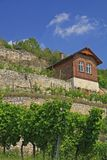 Winegrowing region Saale-Unstrut, Germany Stock Photos
