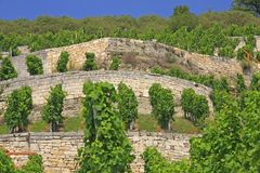 Winegrowing region Saale-Unstrut, Germany Royalty Free Stock Image