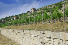 Winegrowing region Saale-Unstrut, Germany Royalty Free Stock Photography