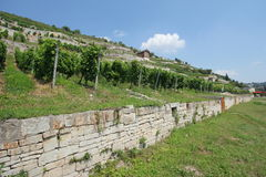 Winegrowing region Saale-Unstrut, Germany Stock Photography