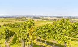 Winegrowing scenery in Hohenlohe. Sunny winegrowing scenery in Hohenlohe, a area in Southern Germany at late summer time Stock Photos