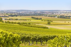 Winegrowing scenery in Hohenlohe. Sunny winegrowing scenery in Hohenlohe, a area in Southern Germany at late summer time Stock Image