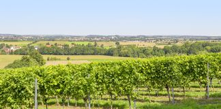 Winegrowing scenery in Hohenlohe. Sunny winegrowing scenery in Hohenlohe, a area in Southern Germany at late summer time Royalty Free Stock Photography