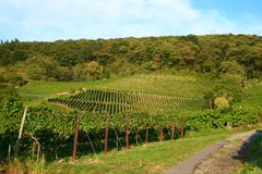 Winegrowing / wine background. Summer / autumn season - winegrowing / nature background Stock Photos