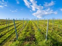 Winegrowing Stock Photography