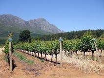 winelands плащи-накидк Стоковое Фото