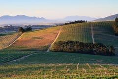winelands στοκ εικόνα
