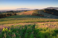 Winelands Royalty Free Stock Images