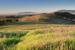 Winelands Stock Photos