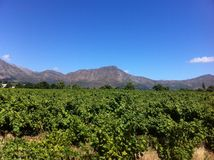 Winelands, Cape Town, Afrique du Sud Images stock