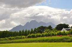 winelands Cape Town South Africa. Cape town wine-route South Africa  agriculture vineyards and wine growing near the  franschhoek  stellenbosch mountains La Stock Image
