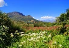 Winelands do cabo em África Imagens de Stock Royalty Free