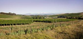 winelands durbanville стоковые изображения rf