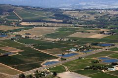 Winelands et vignes Photographie stock