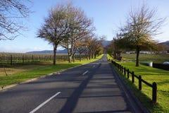 Winelands in Südafrika Lizenzfreie Stockbilder