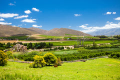 Winelands scenery Royalty Free Stock Images