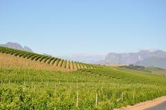 Winelands Stellenbosch开普敦 图库摄影