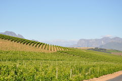 The Winelands Stellenbosch  cape town Stock Photography